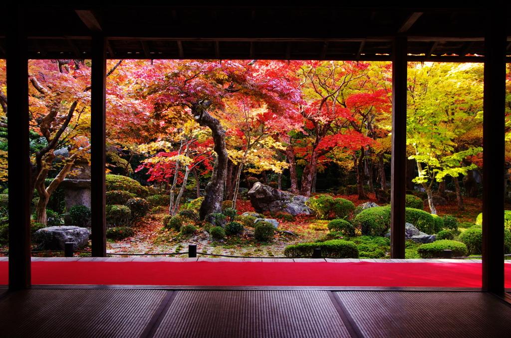 秋色圓光寺
