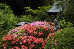 皐月咲くころ(海蔵寺)