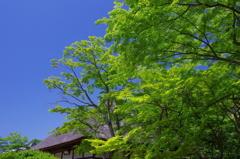 かおる風 円覚寺