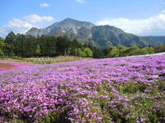 羊山公園-芝桜の丘