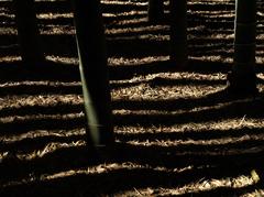 陰影の世界にようこそ~竹林