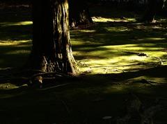 陰影の世界にようこそ ~ 光の恵み