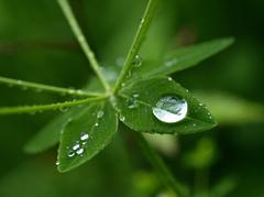 新緑と天の恵み その4