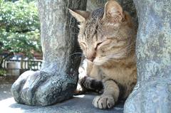 猫日和:あしくらべ