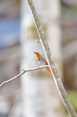 初夏の光 夏の鳥