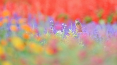 pastel series (1)