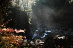 渓流に差し込む朝日