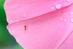 ピンクの上を歩こう!