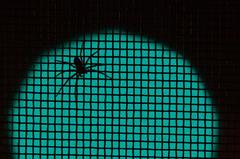 spider : green