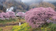 南伊豆の春