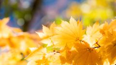 黄色い秋見つけた
