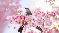 春に囲まれて