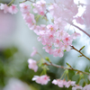 最初にやってきた春