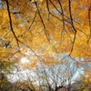 大きな秋の樹の下で