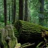チャカムス湖の森の中