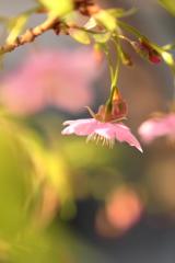 少し早い春