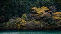 ダム湖のほとり