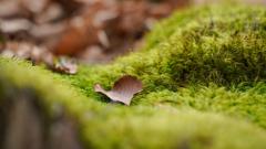 a piece pf Autumn