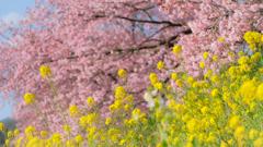 春来ました