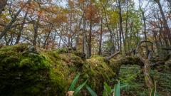 秋の森の中
