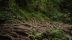 森の生命力