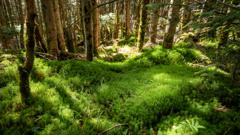 茶臼山の森