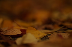 枯葉の眠り