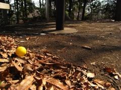 公園(初春)