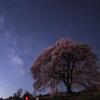 Sakura and Stars 2012