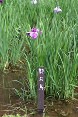 薬師池の花