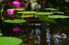 神戸花鳥園