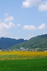 空、山、町、花、田