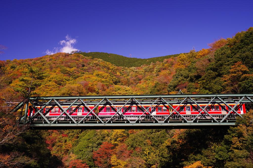 箱根登山鉄道と紅葉 ⑧