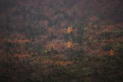 秋の色合い