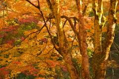 秋色を奏でて