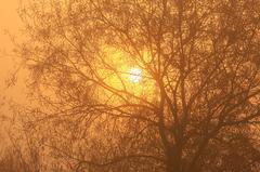 霧が消える時