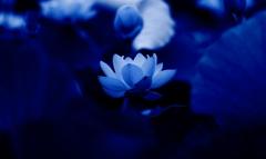 紺碧の輝き