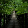 新緑のつり橋を歩む