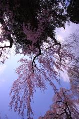春色を見上げて