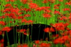 天上の花たち
