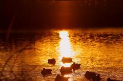 夕日の線上に佇んで...