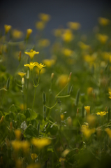 黄色い小人達
