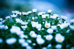 雨上がり、花壇で