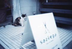 ネコ、待機中