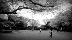 桜の下の物語