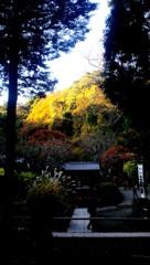 谷間の晩秋