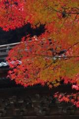 南禅寺 紅葉