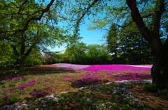芝桜を背景に-1