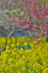 春の三種盛り