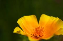 光佇む黄色